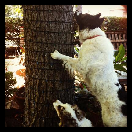 Dog Environmental Cues